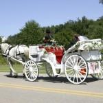 Offene Hochzeitskutsche mit Schimmel
