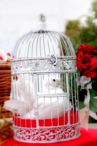 Tauben im dekorativen Kaefig